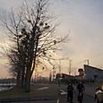 3月29日 宿木の道
